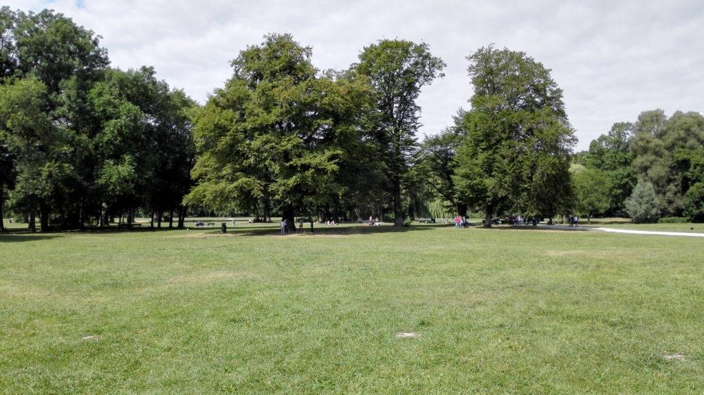 Englischer Garten München Bäume